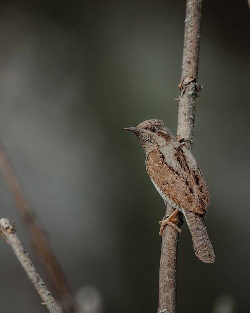 개구리, 겨울, 곤충의 무료 스톡 사진
