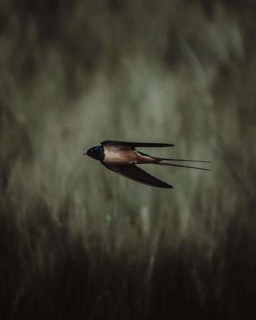 깃털, 나무, 동물의 무료 스톡 사진