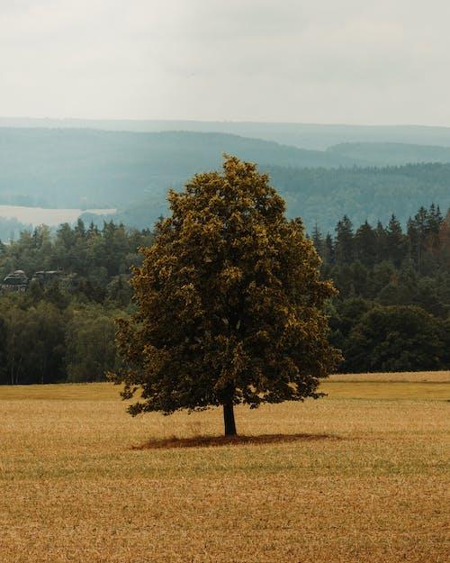 가을, 경치, 나무의 무료 스톡 사진