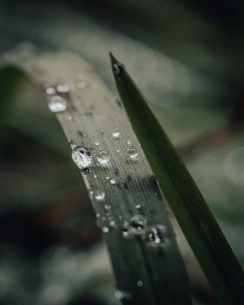 H2O, 날, 눈물 젖은의 무료 스톡 사진