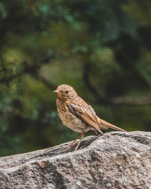 긴, 깃털, 나무의 무료 스톡 사진