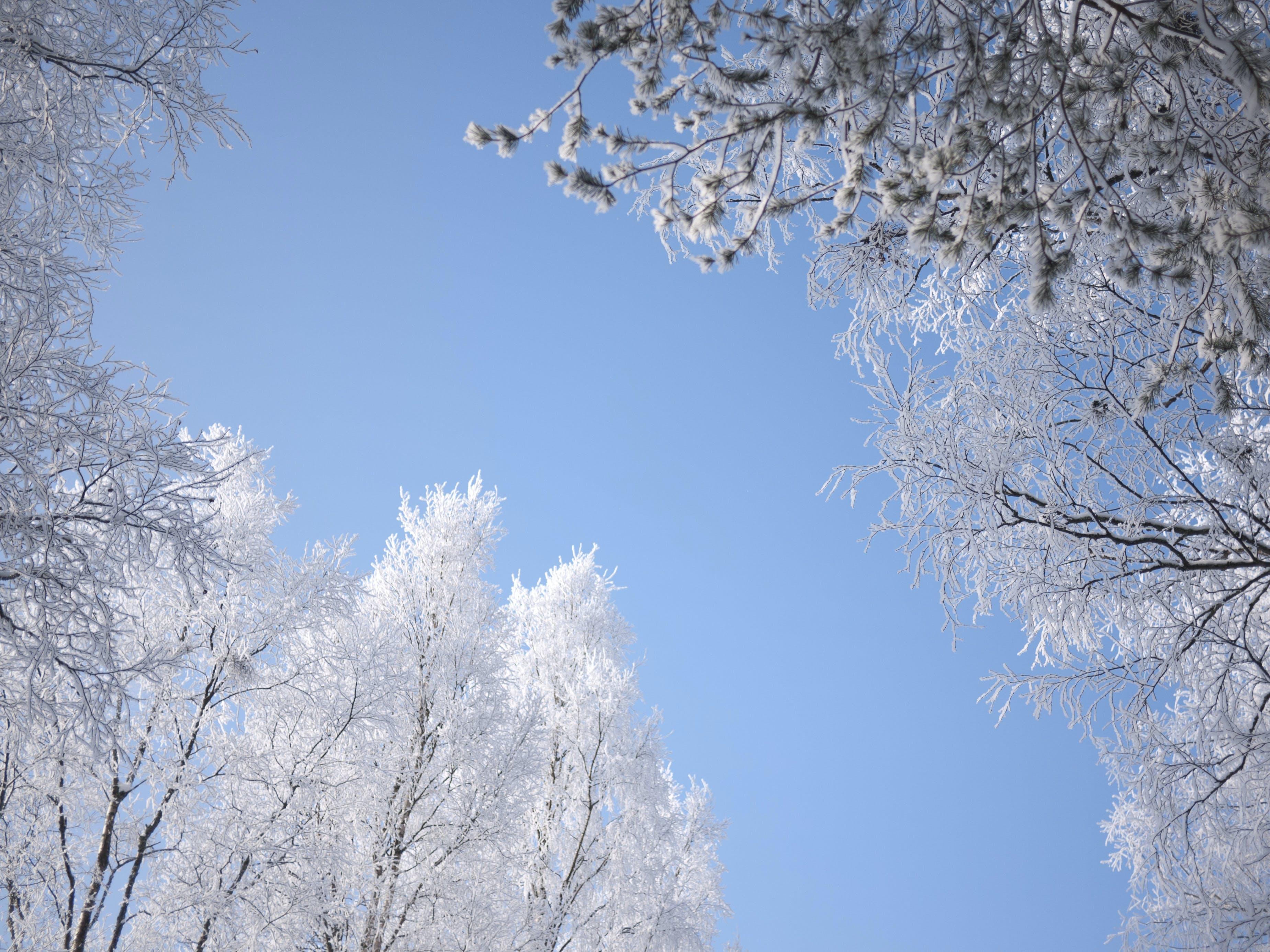 forkølelse, himmel, hvid