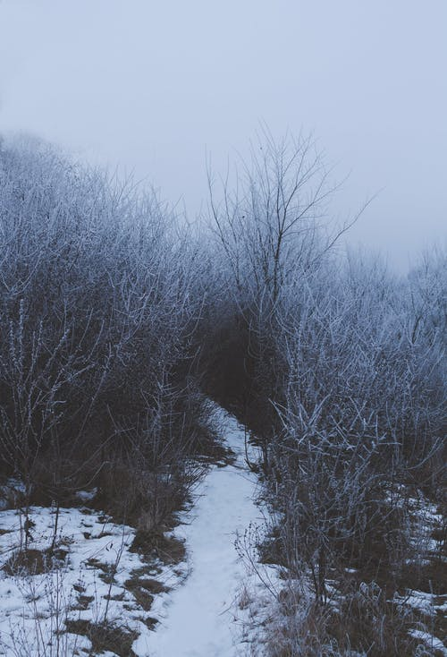 Pathway covered with snow among dense leafless bushes with hoarfrost growing in woodland against foggy sky in cold winter time