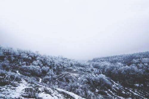 Trees and bushes covered with hoarfrost growing on hilly terrain with snow and trails against foggy sky in cold winter day