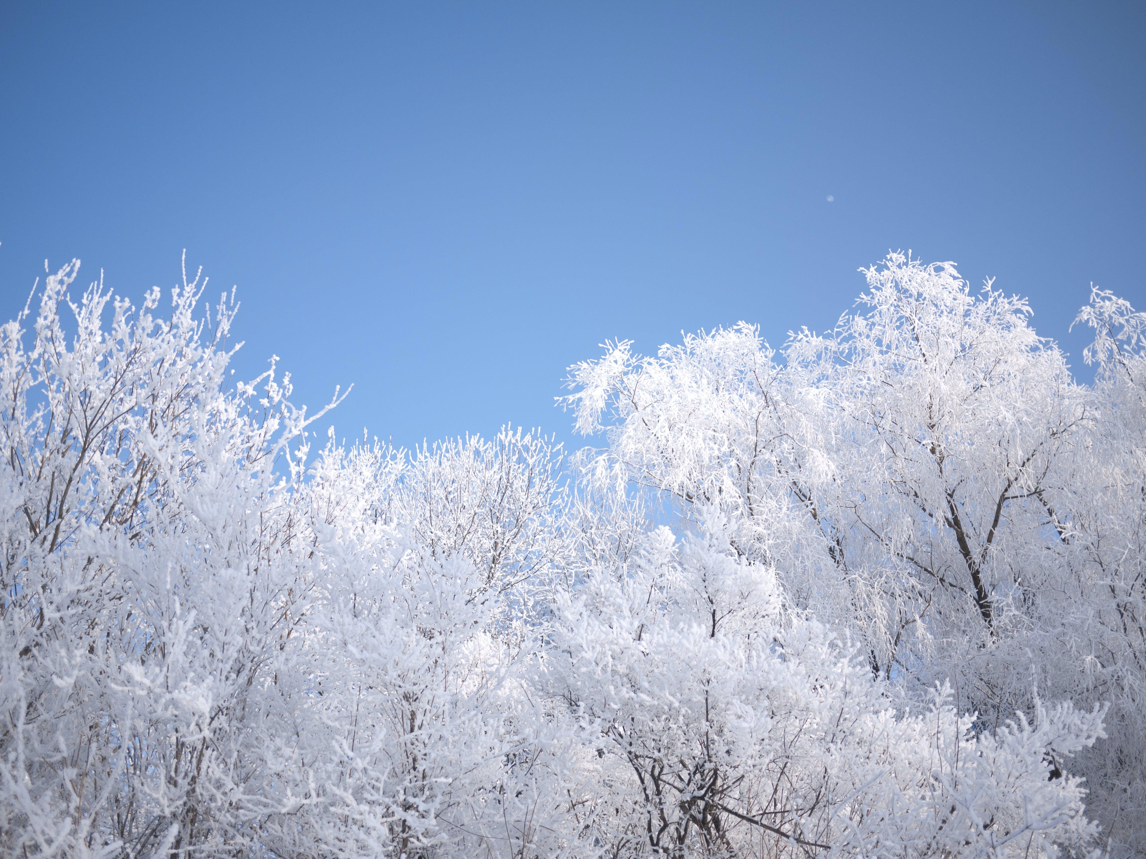 sky, snow, sweden