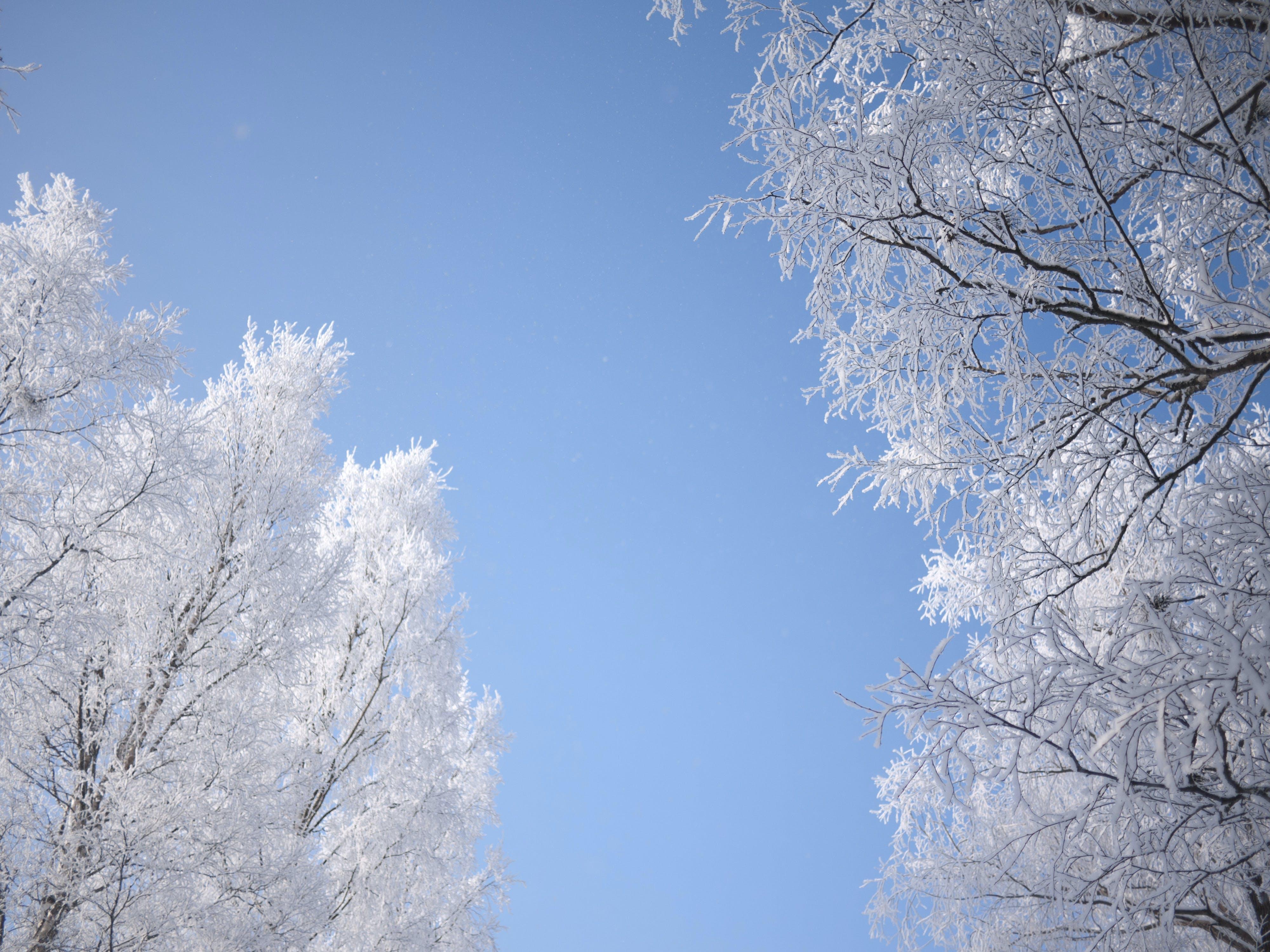 Free stock photo of sky, snow, sweden, trees