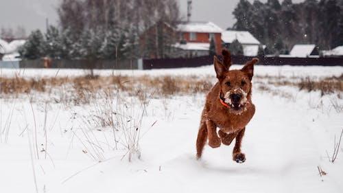 Immagine gratuita di albero, animale, cane, canino