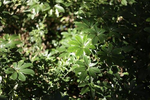 Green Lush Foliage of Plants
