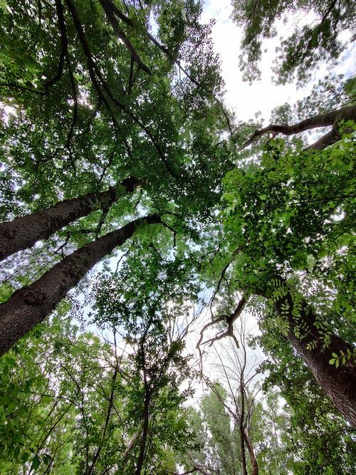 Fotos de stock gratuitas de al aire libre, ángulo bajo, arboles