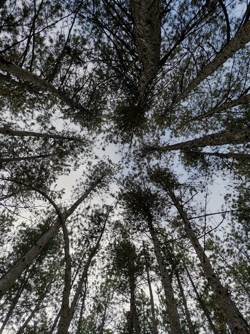 Tall Leafy Trees in Low Angle Photography