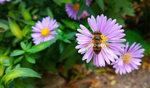 Fotobanka sbezplatnými fotkami na tému flóra, hmyz, kvety