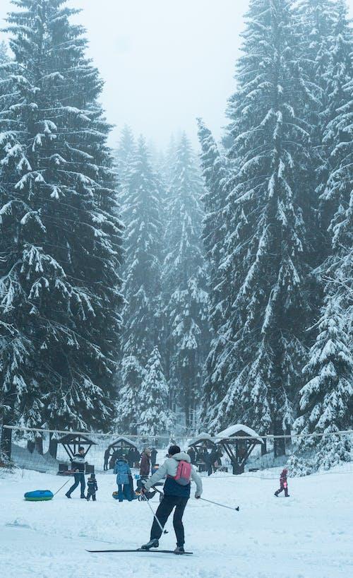 Free stock photo of fir, skier, winter