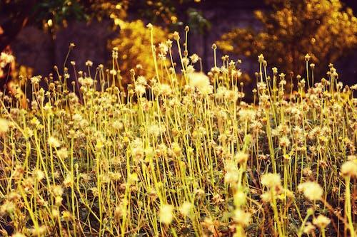 Fotos de stock gratuitas de 'flores diminutas', flores de hierba, fotografía de flores