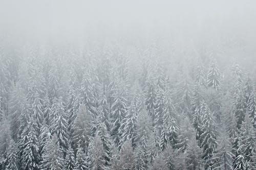 Gratis stockfoto met 4k achtergrond, 4k bureaublad, bevroren