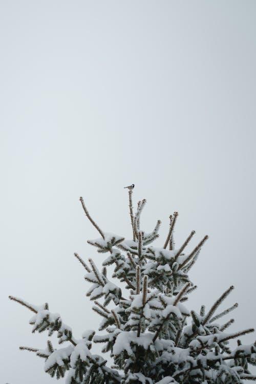 Gratis stockfoto met beest, boom, buiten