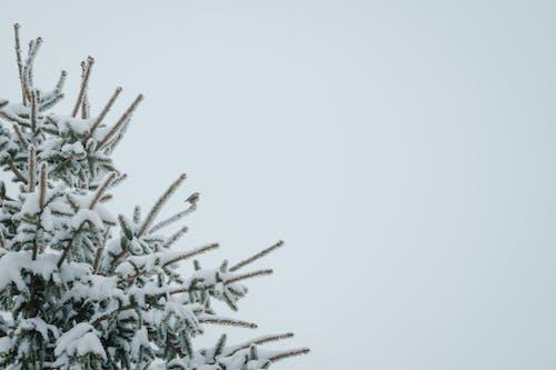 Gratis stockfoto met boom, buiten, buitenshuis