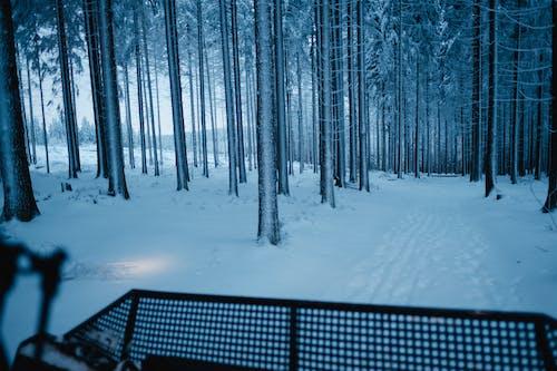 Gratis stockfoto met backcountry skiën, bevroren, blauwe uur