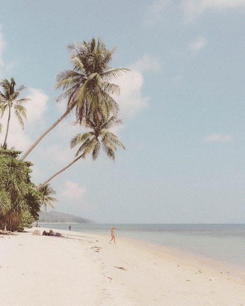 Fotos de stock gratuitas de al lado del océano, Cocoteros, costa