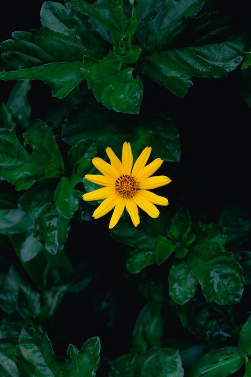 Foto profissional grátis de amarelo, ao ar livre, aumento