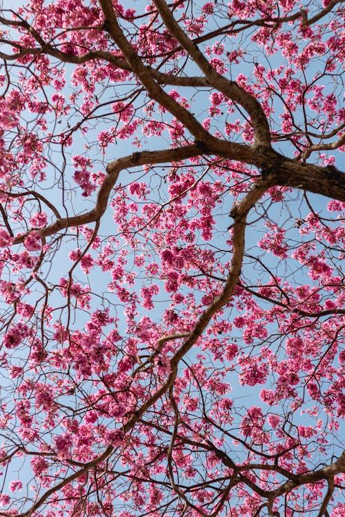 Foto profissional grátis de árvore, atraente, aumento