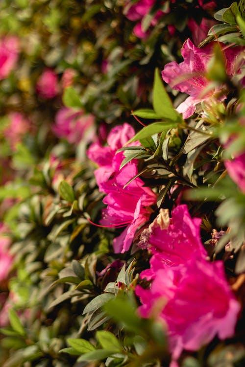 Foto profissional grátis de ao ar livre, arbusto, árvore