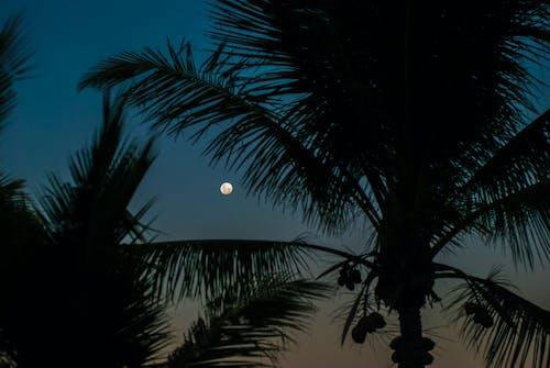 Základová fotografie zdarma na téma kokosové palmy, luna, měsíc