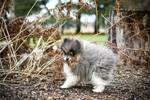 Gray and White Puppy Biting a Dry Grass