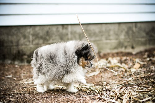 Cute Gray and White Little Dog
