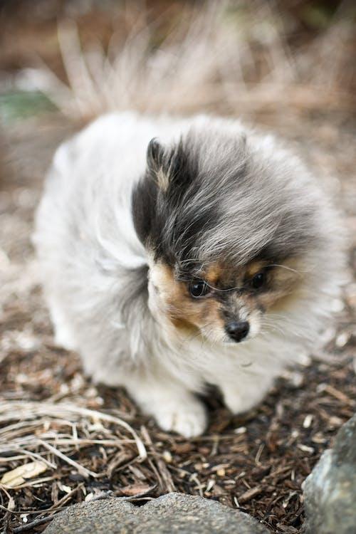 Foto profissional grátis de animal, animal de estimação, ao ar livre, bicho
