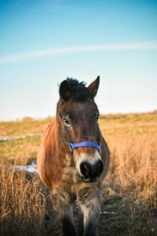Foto profissional grátis de animais selvagens, animal, ao ar livre, área