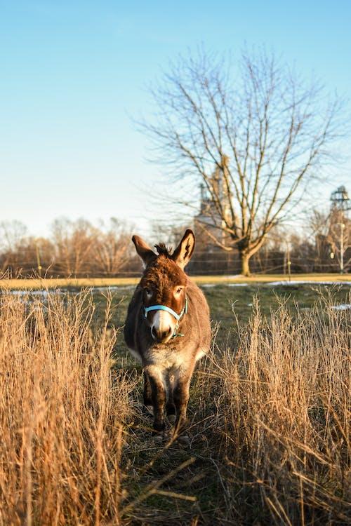 Foto profissional grátis de alvorecer, amanhecer, animal, ao ar livre