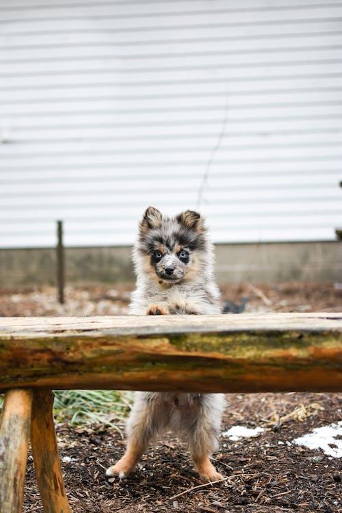 Foto profissional grátis de adorável, animal, animal de estimação, ao ar livre