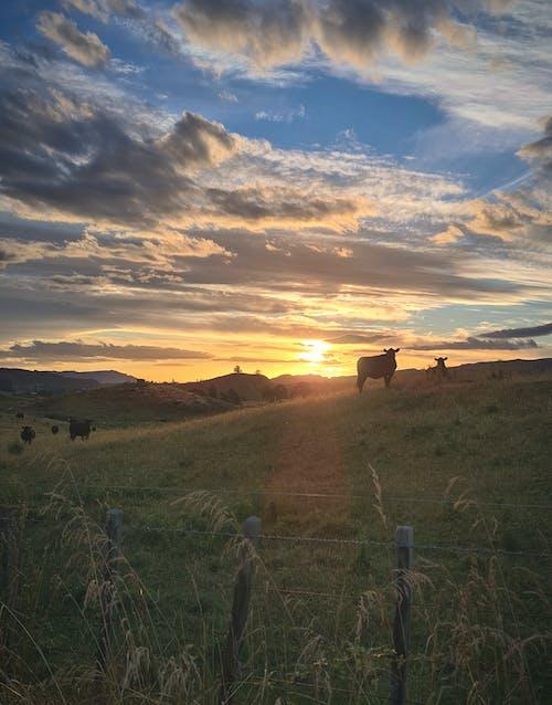 Foto profissional grátis de céu, gado, meio ambiente