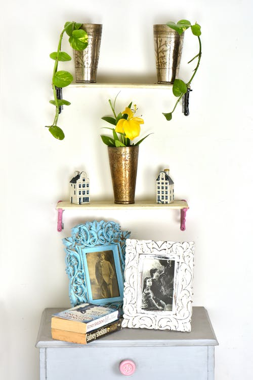 Green Potted Plants on Wooden Shelves