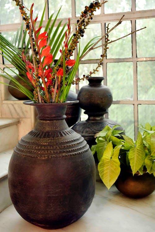 Free stock photo of beautiful flowers, decor, flower pots