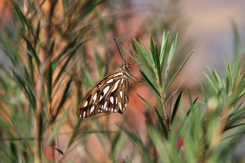 Brown and White Butterfly on Green Leaves