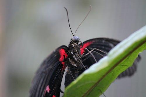 Immagine gratuita di ali, antenna, carta da parati farfalla