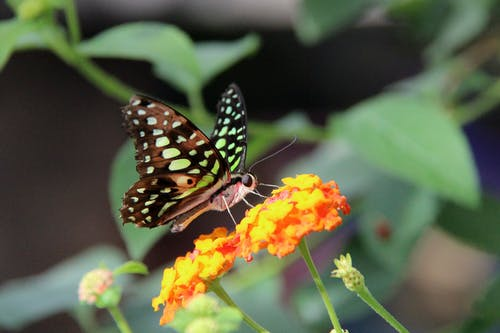 Immagine gratuita di ali, carta da parati farfalla, delicato