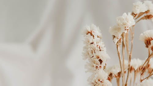 Free stock photo of bloom, blooming flower, blooming flowers