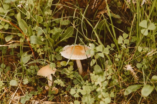 Brown and White Mushroom Surrounded by Green Plants