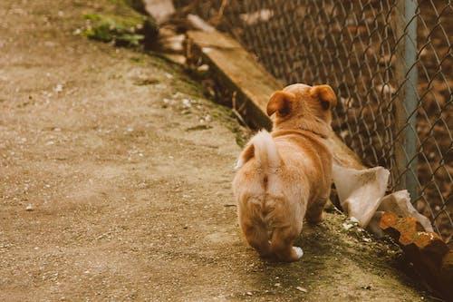 Бесплатное стоковое фото с животное, земля, коричневая собака