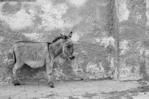 Grayscale Photo of Horse on Concrete Floor