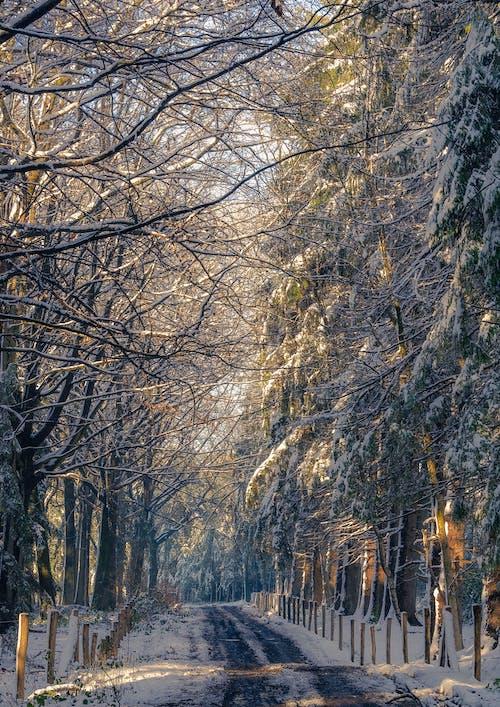 Gratis stockfoto met begeleiding, belemmeringen, bomen