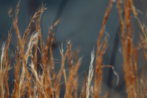 Dry grass growing in autumn field in countryside
