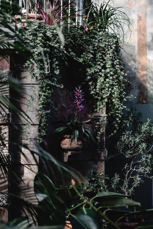 คลังภาพถ่ายฟรี ของ กระถางดอกไม้, กลางแจ้ง, การตกแต่ง