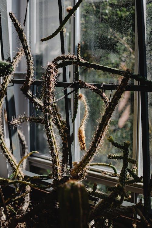 คลังภาพถ่ายฟรี ของ กลางแจ้ง, กั้นรั้ว, การเกษตร