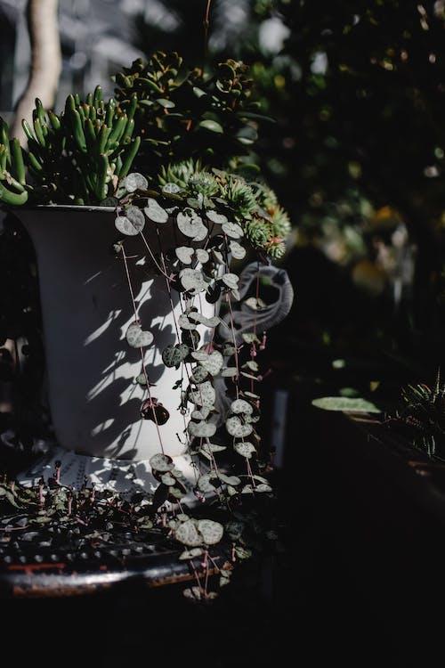 คลังภาพถ่ายฟรี ของ กระถาง, กระถางดอกไม้, กลางแจ้ง