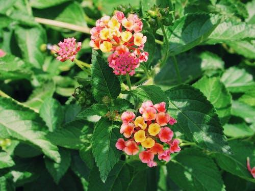 Free stock photo of beautiful flowers, beauty, bloom