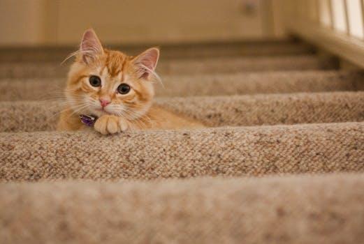 Orange Tabby Cat on Grey Staircase