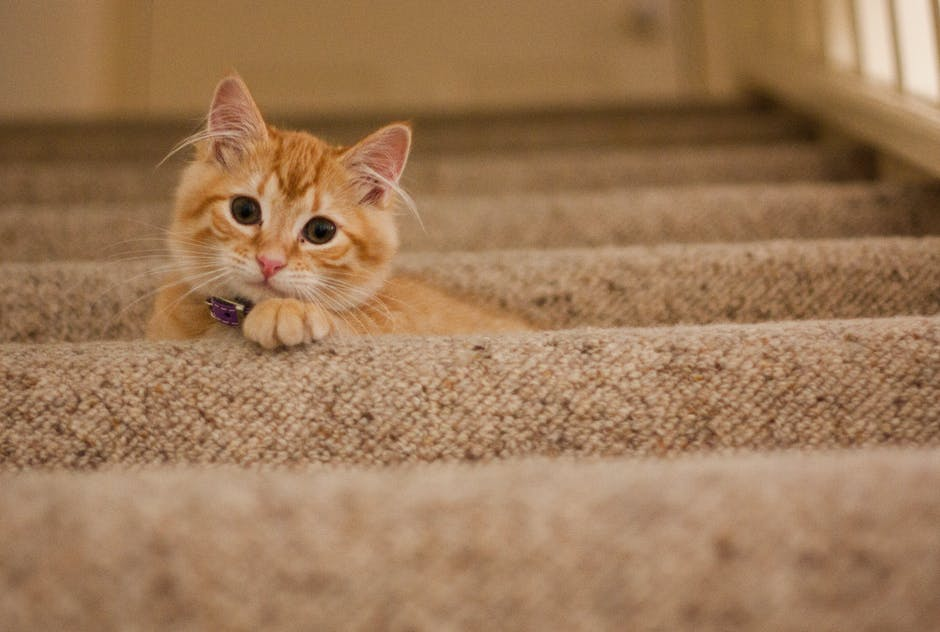 Orange Tabby Cat on Grey Staircase